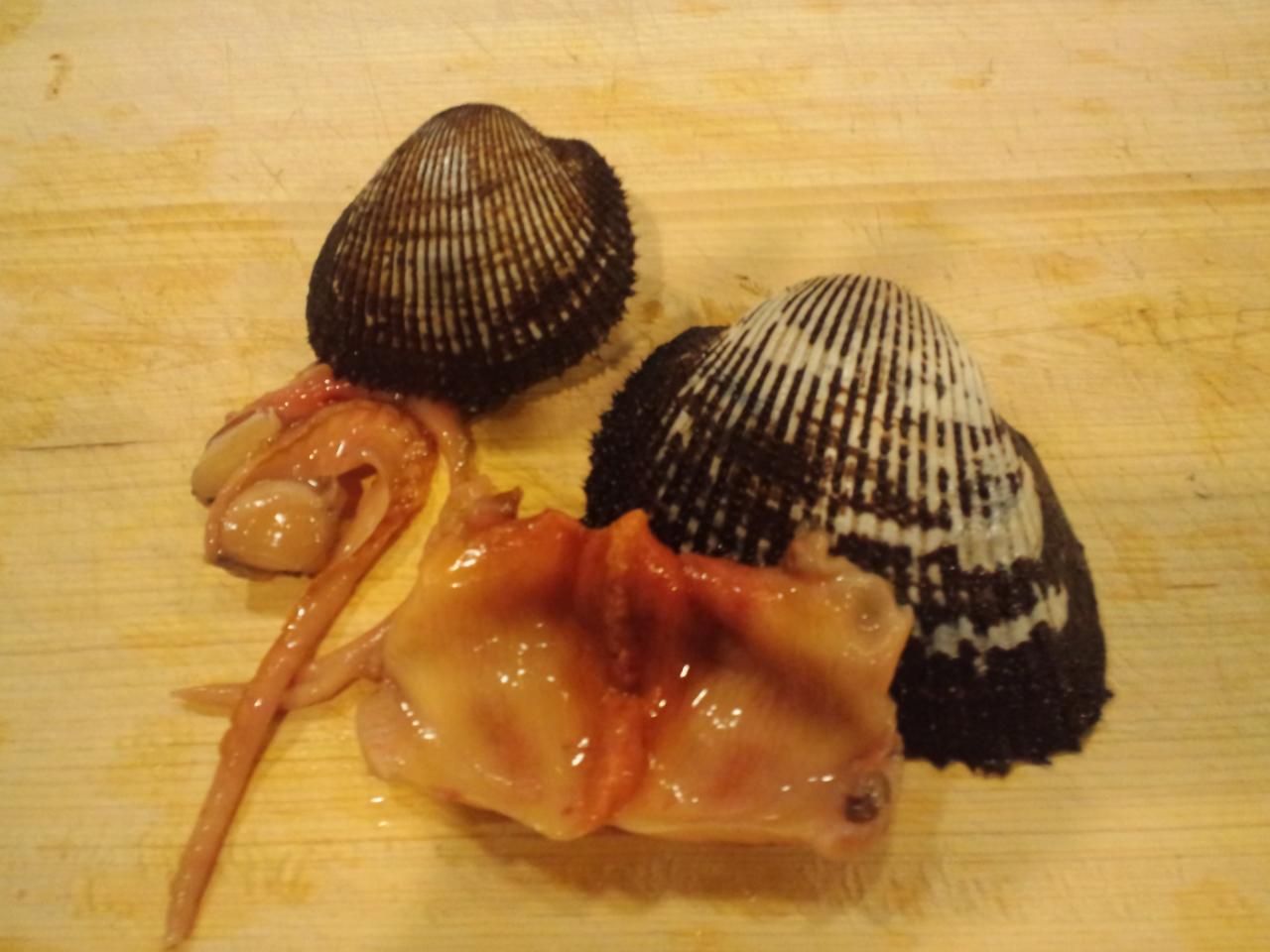 デッカイ赤貝とデッカイとり貝。